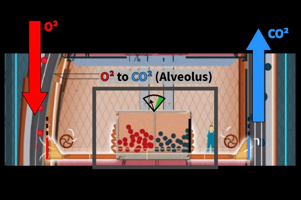 lungs_alveolus_01