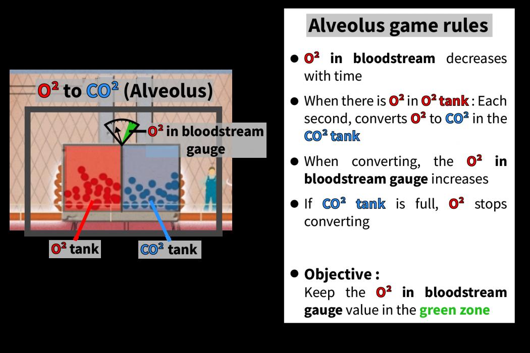 lungs_alveolus_02